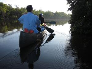 Everglades 383