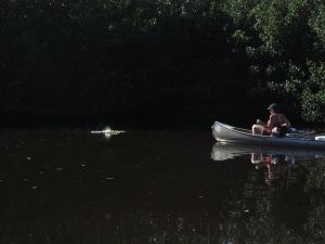 Everglades 457