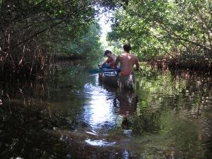 Everglades 479