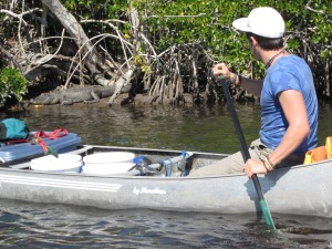 Everglades 594