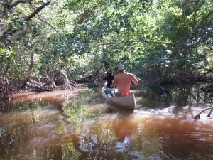 Everglades 670