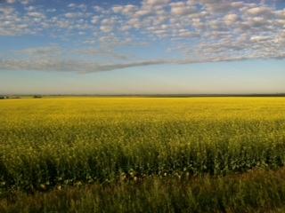 """Crossing Saskatchewan"""